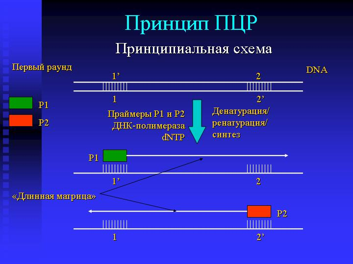 Схема ПЦР - 1-й раунд.
